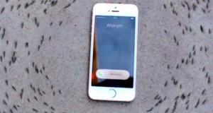 Experiment bizar: ce efect are un telefon iPhone asupra unor furnici VIDEO