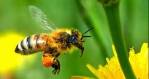 FOTOGRAFIE şocantă: ce a făcut o albină dintr-o maşină Audi