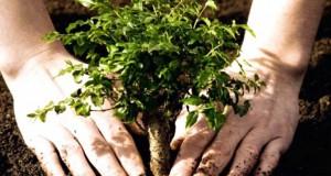 """""""AmCham Romania"""" contribuie la însănătoșirea Bucureștiului. Uite câți copaci vor planta."""