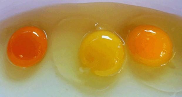 Cum îţi dai seama care ouă sunt sănătoase, în funcţie de gălbenuşul lor