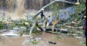 TRAGEDIE. 20 de liceeni au murit zdrobiți de copaci în timp ce înotau