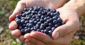Singurul fruct care te ajută să slăbeşti rapid şi fără niciun efort