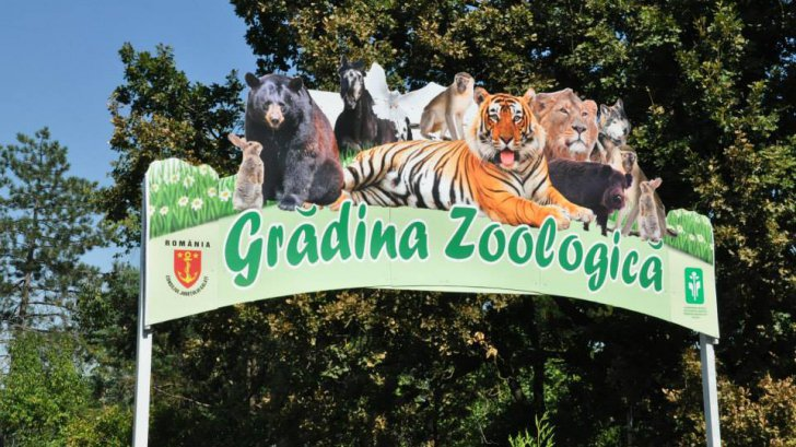 Adăpost de lux pentru maimuţe, la ZOO Galaţi. Grădina Zoologică nu are însă maimuţe