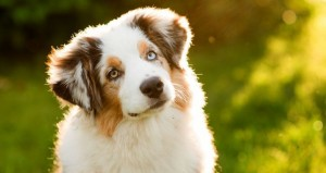 Puterea A Patra: școală de dresaj canin vestită în toată România