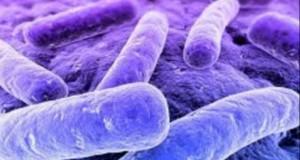 Cum ştii că te-ai infectat cu E.coli: dacă ai aceste simptome, mergi la medic URGENT!