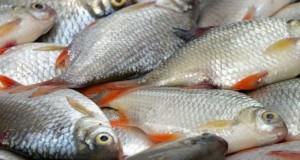 La ce trebuie să fii atent atunci când cumperi peşte