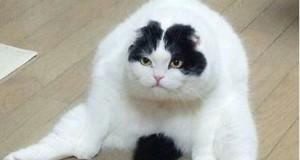 Cele mai amuzante poze cu pisici de pe Facebook. Râzi garantat