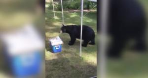 Dădeau o petrecere în aer liber, când un urs s-a apropiat de mese. Ce a urmat? Râzi garantat