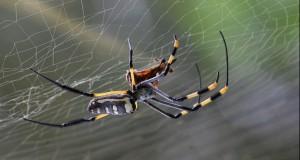 """Imaginile care te scapă de frica de păianjeni. Nu știai că au așa ceva pe corp. """"Sunt chiar drăguțe"""""""