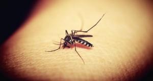 Primele simptome care îţi arată că ai fost infectat cu virusul West Nile. Mergi URGENT la medic!