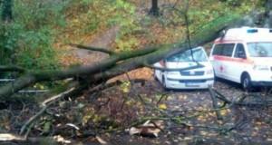 Un copac a căzut peste două ambulanțe, în Brașov