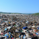 Descoperire teribilă la groapa de gunoi Pata Rât. Angajaţii de la salubritate, şocaţi