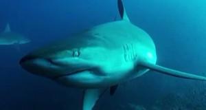 Clipe de coşmar: Autorităţile, în alertă după un atac al unui rechin în California