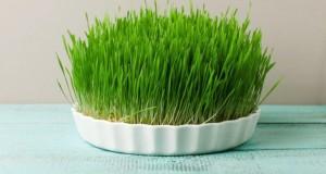 Uimitoarea dietă cu grâu verde. Efectele ei se văd instant