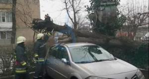 Efectul alertei meteo de vânt puternic: un copac s-a prăbuşit peste o maşină, în Craiova