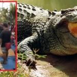 """Descoperire înfiorătoare în burta unui crocodil de 7 metri! """"Nici în cele mai negre vise…"""""""