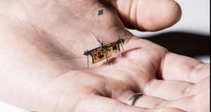 Prima insectă robotică wireless și-a luat zborul! Iată cum se alimentează