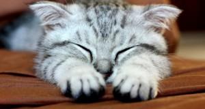 De ce ar trebui să îți trăiești viața precum pisica ta