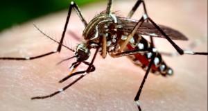 Situație alarmantă în Dolj. Şase noi cazuri de infecție cu virusul West Nile