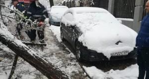 Copaci doborâţi de zăpadă, în Craiova – FOTO