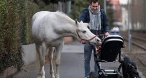 """Calul """"maidanez"""" care se plimbă prin oraș: animalul are o poveste dramatică"""