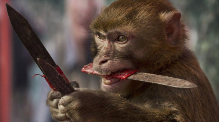 Maimute cu gene de creier uman