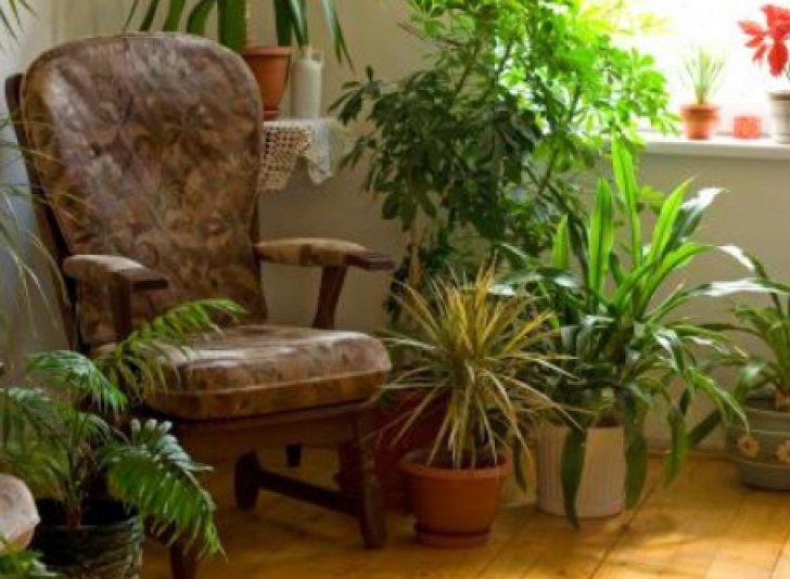 Top 5 cele mai sănătoase plante de interior