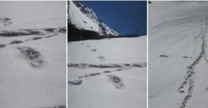 Alpiniștii din Nepal ar fi dat de urma lui Yeti